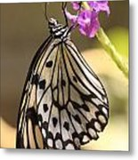 Butterfly On A Stem Metal Print