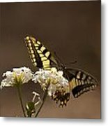 Butterfly On Blossom Flowers Metal Print