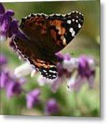 Butterfly On Lavender II Metal Print