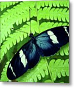 Butterfly On Leaf. Metal Print by Kryssia Campos