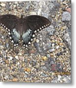 Butterfly On My Hike Route Metal Print