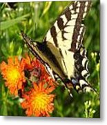 Butterfly On Orange Flowers Metal Print