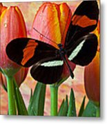 Butterfly On Orange Tulip Metal Print by Garry Gay