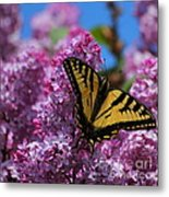 Butterfly On Pink Lilac Metal Print