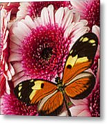 Butterfly On Pink Mum Metal Print