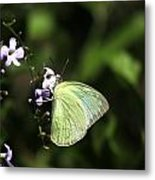 Butterfly On Purple Flower Metal Print