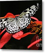Butterfly On Red Metal Print