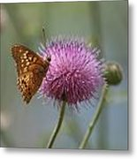 Butterfly On The Bloom Metal Print