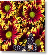 Butterfly On Yellow Red Daises  Metal Print