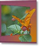 Butterfly Orange 16 By 20 Metal Print