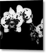 Butterfly Orchid In The Shadows Metal Print