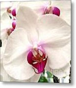 Butterfly Orchids Closeup Metal Print