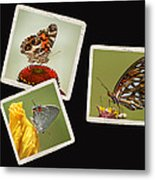 Butterfly Picture Page Collage Metal Print