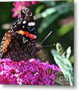 Butterfly Plant At Work Metal Print