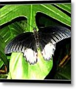 Butterfly Ready For Take Off Metal Print
