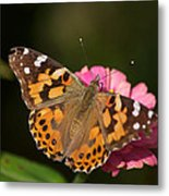 Butterfly Metal Print