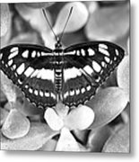 Butterfly Study #0061 Metal Print by Floyd Menezes