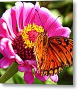 Butterfly Treat Metal Print