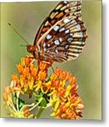 Butterfly Weed 1 Metal Print