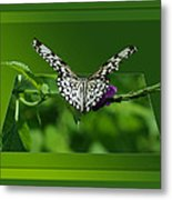 Butterfly White 16 By 20 Metal Print