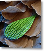 Butterfly Wing Scale Sem Metal Print