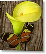 Butterfly With Calla Lily Metal Print