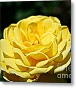 Buttery Rose Metal Print