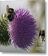 Buzz And Munch Metal Print