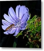 Buzzy In Blue Metal Print