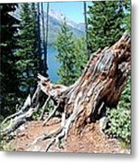 By Jenny Lake Metal Print