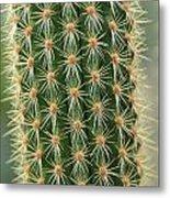 Cactus 19 Metal Print