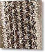 Cactus 19 Sepia Metal Print