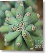 Cactus 25 Metal Print