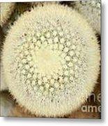 Cactus 44 Metal Print
