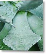 Cactus 5 Metal Print