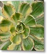 Cactus 63 Metal Print