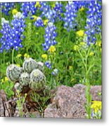 Cactus And Bluebonnets 2am-28694 Metal Print