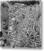 Cactus And Rocks Metal Print