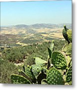Cactus At Samaria Metal Print