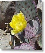 Cactus Flower 2 Metal Print by Snake Jagger