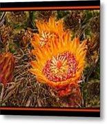 Cactus Flower 3 Metal Print
