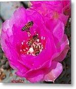 Cactus Flower Buzz Metal Print