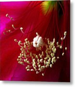 Cactus Flower Interior Metal Print