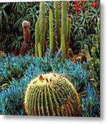 Cactus Gardens Metal Print