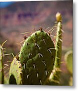 Cactus With A View Metal Print
