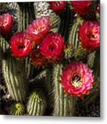 Cactus With Red Flowers Metal Print