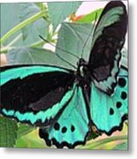 Butterfly Of Many Colors Metal Print