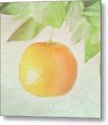 Calamondin Miniature Orange Metal Print by Peter Chadwick LRPS