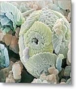 Calcareous Phytoplankton Fossil, Sem Metal Print