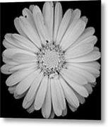 Calendula Flower - Black And White Metal Print